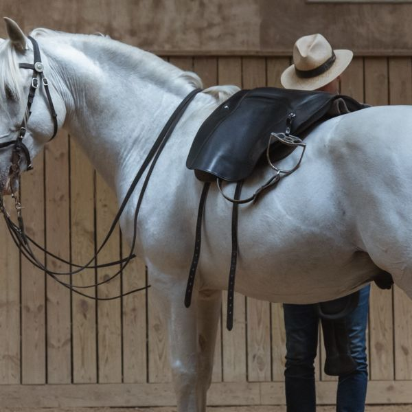 BB® Saddle